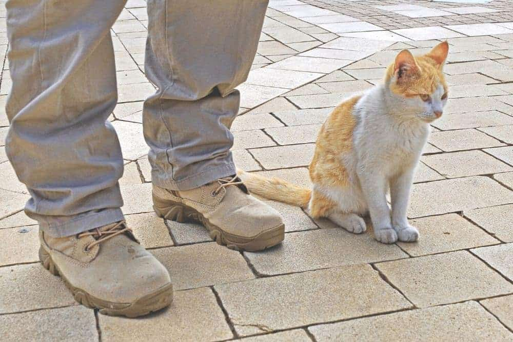 Whether you've been wearing tactical boots for a long time or you just consider picking a pair of professional tactical boots instead of shoes for your job. You know well that the boot height has a big effect on how you will move around on them. 6-inch, 8-inch, or 10-inch tactical boots may be no strangers, but the low-cut tactical boots could be a new concept to this specialized tactical footwear. There is actually no specific definition for this boot line. When we were doing research on the current market as well as consulting boots experts at the same time, it comes out that the low-cut tactical boots can be seen as the tactical footwear line that is less than 6 inches in height and specially crafted for serving all tactical purposes. With such height, wearers may find low-cut tactical boots more like light-duty work boots or running tactical boots rather than hard-duty tactical/military footwear. But they are definitely more than what you think. These boots are excessively agile, flexible and lightweight than traditional tactical boots to handle all situations no matter trail running, climbing, hunting or guard duties. In comparison to other tactical boot lines, the low-cut boot has one major shortcoming: its ability to protect against foreign objects from splashing to the ankles is limited. However, you should always have yourself a pair of these boots because it is versatile in all situations, even when coordinating with clothes.